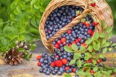 Dzikie czarne jagody i truskawki w koszu na stołowym zbliżeniu Obraz Stock