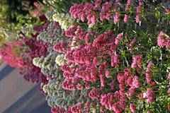 Dzikie granic rośliny Obraz Royalty Free