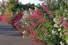 Dzikie granic rośliny Obrazy Royalty Free