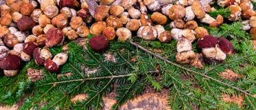 Dzikie i comestible surowe pieczarki zdjęcia stock
