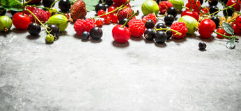 Dzikie jagody na drylują stół Fotografia Stock