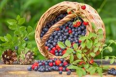Dzikie jagody w koszu na drewnianym stole Fotografia Stock