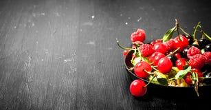 Dzikie jagody w starym talerzu kurczak na czarnym drewnianym tle Zdjęcie Stock