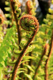 dzikie krzewów Obraz Stock