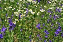 Dzikie kwiatonośne rośliny Obrazy Royalty Free