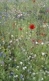 dzikie kwiaty Obraz Royalty Free