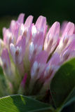 dzikie kwiaty Zdjęcia Stock