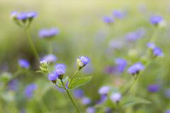 dzikie kwiaty Obrazy Stock