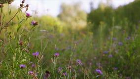 dzikie kwiaty zbiory