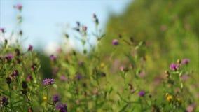 dzikie kwiaty zbiory wideo