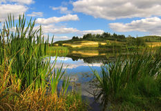 dzikie miejsce Obraz Royalty Free