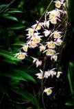 Dzikie orchidee Zdjęcia Stock