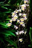 Dzikie orchidee Fotografia Royalty Free