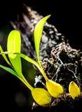 Dzikie orchidee Obraz Stock