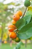 Dzikie owoc Fotografia Royalty Free