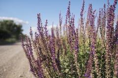 Dzikie plenerowe rośliny obrazy royalty free