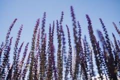 Dzikie plenerowe rośliny zdjęcie royalty free