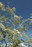 Dzikie plenerowe rośliny zdjęcie stock