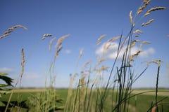 Dzikie plenerowe rośliny zdjęcia stock