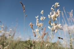 Dzikie plenerowe rośliny Fotografia Royalty Free