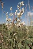 Dzikie plenerowe rośliny Zdjęcia Royalty Free