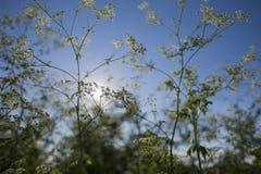 Dzikie plenerowe rośliny obraz stock