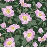 Dzikie róże - bezszwowy wzór Obrazy Royalty Free