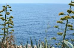 Dzikie rośliny i morze Obrazy Stock