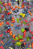 dzikie tło jagody zdjęcie stock