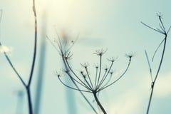 dzikie trawy Zdjęcia Royalty Free