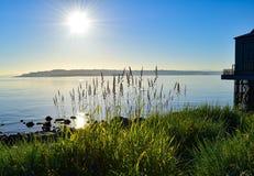 Dzikie trawy przy wschodem słońca na Puget Sound Fotografia Royalty Free