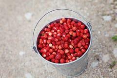 Dzikie truskawki Zdjęcia Stock