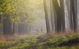 dzikie życie Obraz Stock