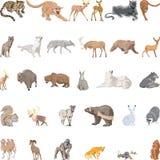 Dzikie Zwierzęta Ustawiający Zdjęcia Royalty Free