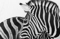dzikie zwierzę Obraz Royalty Free