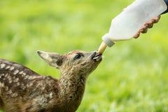 Dzikie zwierzę pomoc obraz royalty free