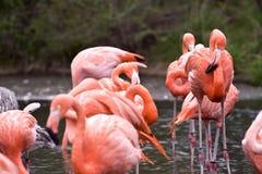 Dzikie zwierzęta Fotografia Stock