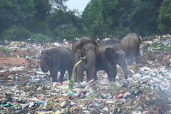 Dzikie zwierzęta i ekologia Zdjęcia Royalty Free