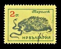 Dzikie zwierz?ta na znaczkach pocztowych fotografia royalty free