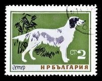 Dzikie zwierz?ta na znaczkach pocztowych zdjęcie royalty free