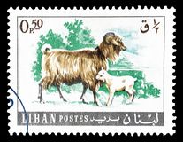 Dzikie zwierz?ta na znaczkach pocztowych zdjęcie stock