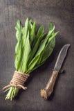 Dzikiego czosnku liście w wiązce na popielatym kamiennym tle, zdrowy styl życia, sezonowy wiosny ziele dla kuchni, allium Fotografia Stock