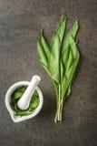 Dzikiego czosnku liście z białym moździerzem na popielatym kamiennym tle, zdrowy styl życia, sezonowy wiosny ziele dla kuchni, al Zdjęcia Stock