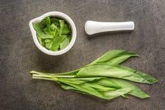 Dzikiego czosnku liście z białym moździerzem na popielatym kamiennym tle, zdrowy styl życia, sezonowy wiosny ziele dla kuchni, al Obraz Royalty Free