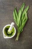Dzikiego czosnku liście z białym moździerzem na popielatym kamiennym tle, zdrowy styl życia, sezonowy wiosny ziele dla kuchni, al Zdjęcia Royalty Free