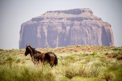 Dzikiego konia krajobraz Fotografia Stock