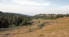 Dzikiego konia podlewania dziura w Przegranym Wodnym jarze w Pryor gór Dzikiego konia pasmie na Montana Wyoming granicie stanu Obrazy Stock