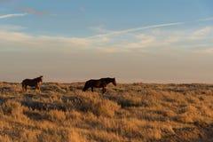 Dzikiego konia Sceniczna pętla, Wyoming zdjęcia stock