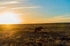 Dzikiego konia Sceniczna pętla, Wyoming zdjęcie royalty free