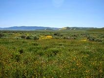 Dzikiego kwiatu pola kwitnienie w wiośnie w dolinie fotografia stock